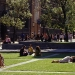 rmit-new-lawn-web